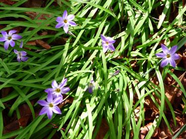 Spring_Stars