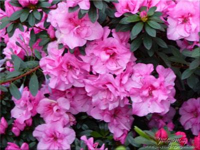 Spring_2011_3