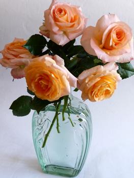 Summer_Roses