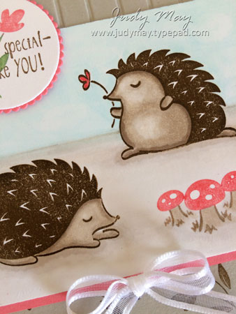 Hedgehugs_Closeup